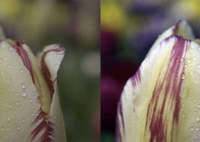Flower retouching